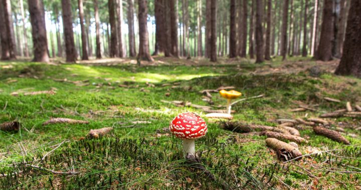 https://www.pexels.com/photo/red-and-white-mushroom-beside-yellow-mushroom-near-green-trees-during-daytime-53154/