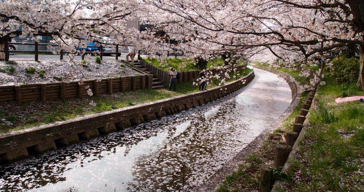 https://www.pexels.com/photo/nature-traveling-spring-river-103572